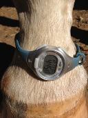 Horse wears watch