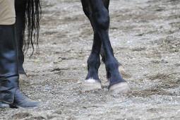 Reannon leg yeild in hand