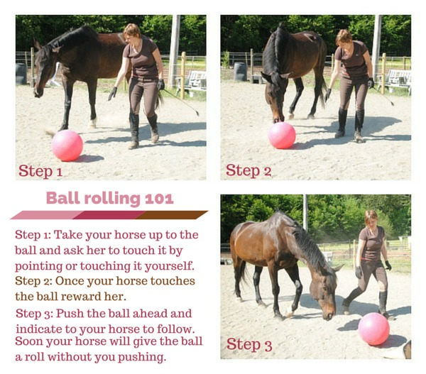 heather_nelson_liberty_training_teach_ball_rolling